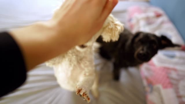 Persona Perspektive der Männer spielen mit seinen hyperaktiven Hunden