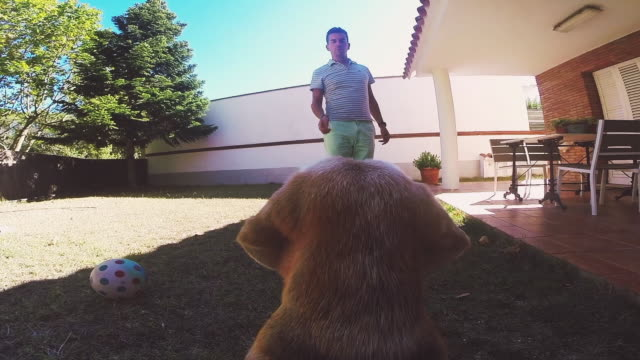 vídeos de stock, filmes e b-roll de personal perspective footage taken from beagle dog at home playing with his owner and feeding him with tricks in the backyard on summertime with original point of view. - biscoito de cachorro