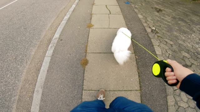 personal perspective of man walking his dog on sidewalk - pet leash stock videos & royalty-free footage