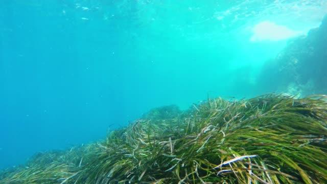ウェアラブル カメラと水中シュノーケ リング ms 個人遠近法 - 海藻点の映像素材/bロール