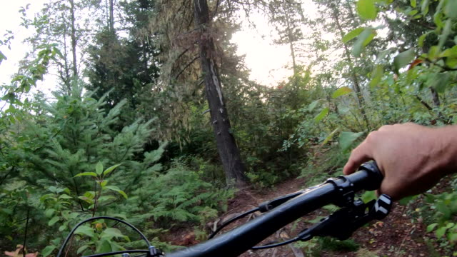 vídeos de stock e filmes b-roll de pov perspective of mountain biker traversing forest trail - bicicleta de montanha