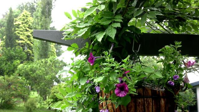 Pertunias in Blumenampel und Glyzine an regnerischen Tag