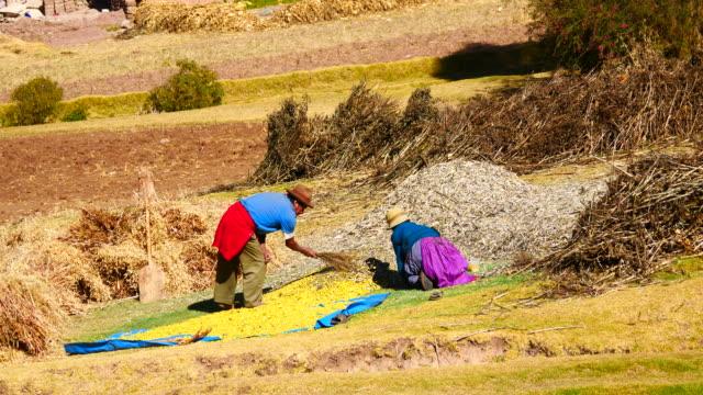 vídeos y material grabado en eventos de stock de peru, amazon basin, quechua indians working in the field - américa del sur