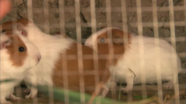 vídeos de stock, filmes e b-roll de peru andes village of huaripampa - grupo pequeno de animais
