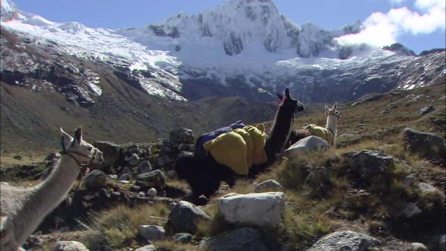 peru huascarán - lama oggetto creato dall'uomo video stock e b–roll