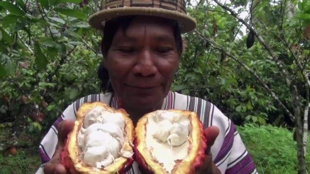stockvideo's en b-roll-footage met peru intenta reemplazar por cafe y cacao los cultivos de hoja de coca en el valle de los rios apurimac ene y mantaro una zona tradicionalmente... - agricultura