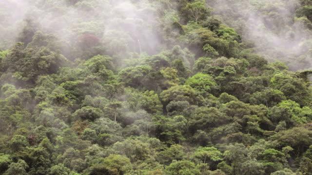 Peru, San Pedro, Manu National-Park, Cloud forest. UNESCO-World-Heritage-Site