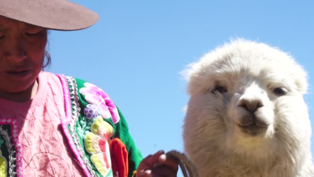 peruvian woman with her cute alpaca - peruvian ethnicity stock videos & royalty-free footage