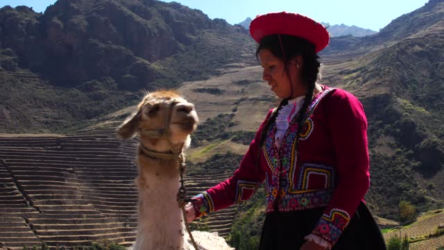 peruvian young woman with her llama in sacred valley, cusco, peru - peru stock videos & royalty-free footage