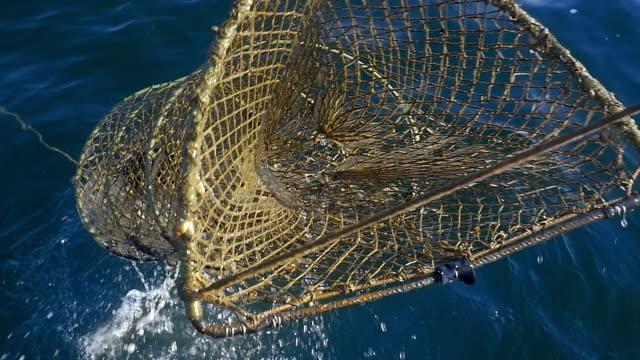 Pesca delle seppie