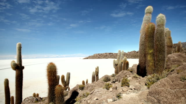 isla de pescadores, bolivia - cactus video stock e b–roll