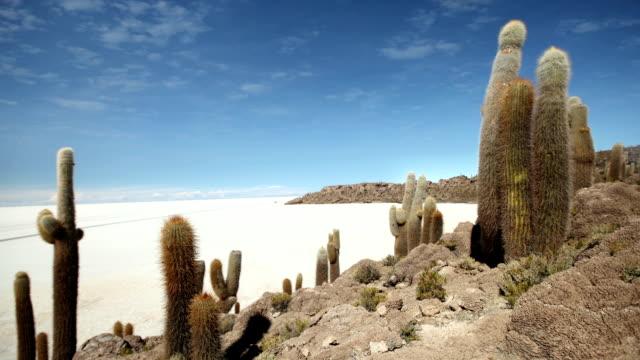 pescadores island, bolivia - cactus stock videos & royalty-free footage