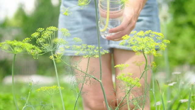 pest control spraying - dill stock videos and b-roll footage