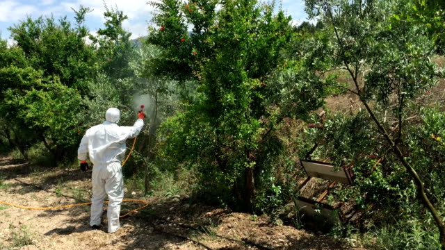 pesticides in olive trees - insecticide stock videos & royalty-free footage