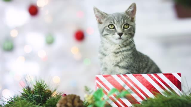 Haustier-Annahme für Weihnachten