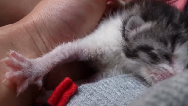 pet adoption - newborn tabby kitten yawning - yuko yamada stock videos & royalty-free footage