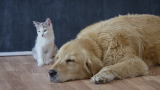 pet adoption - dog and cat stock videos and b-roll footage