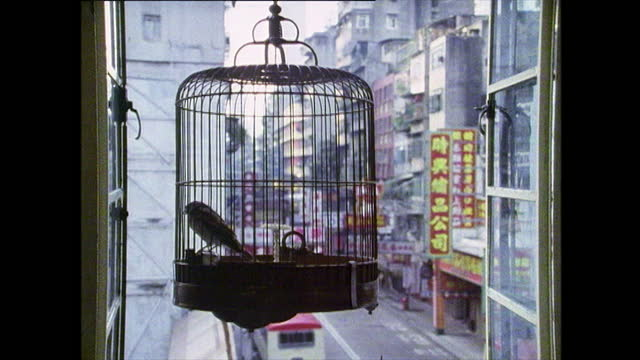 pet birds kept in cages in teahouse; hong kong, 1989 - banner stock videos & royalty-free footage