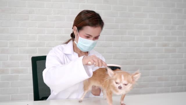 vídeos de stock, filmes e b-roll de pet care emprega clientes de um cão. - parte do corpo animal