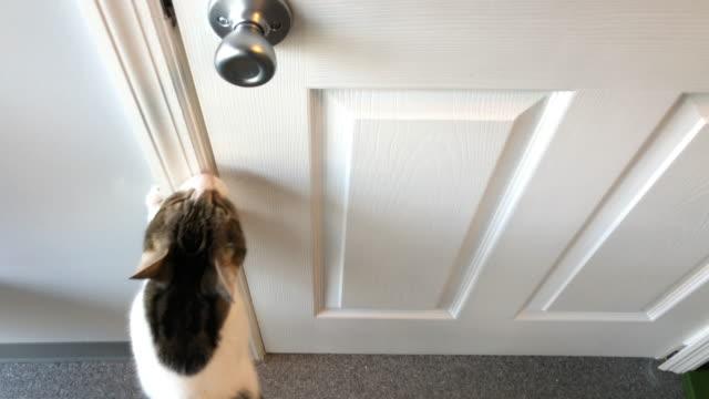 pet cat scratching door, wanting to leave - 動物の足点の映像素材/bロール