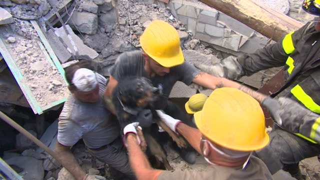 a pet dog is saved by rescue teams after large parts of pescara are devasted by an earthquake - 解放する点の映像素材/bロール