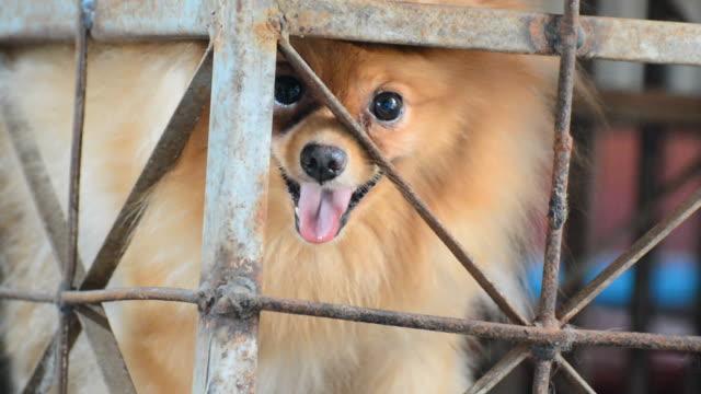 vídeos y material grabado en eventos de stock de perro mascota - cajón para embalar