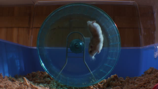 vídeos y material grabado en eventos de stock de slomo pet dwarf hamster running in wheel in cage and falling - hamster