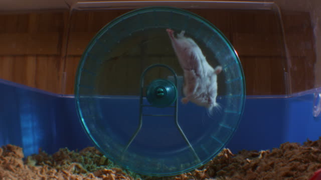 slomo pet dwarf hamster starts running in wheel in cage then is thrown out then starts again - wheel stock videos & royalty-free footage
