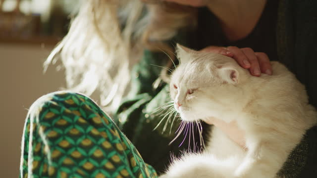 pet love. woman hugging happy british cat on a couch - pet owner stock videos & royalty-free footage