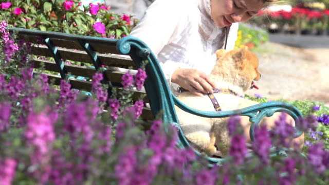 pet owner and  pomeranian dog sitting on bench in flower garden