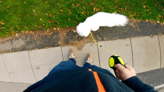 pet owner walks with his dog on a sidewalk - pet leash stock videos & royalty-free footage