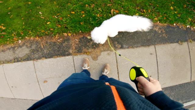 Huisdier eigenaar loopt met zijn hond op een trottoir