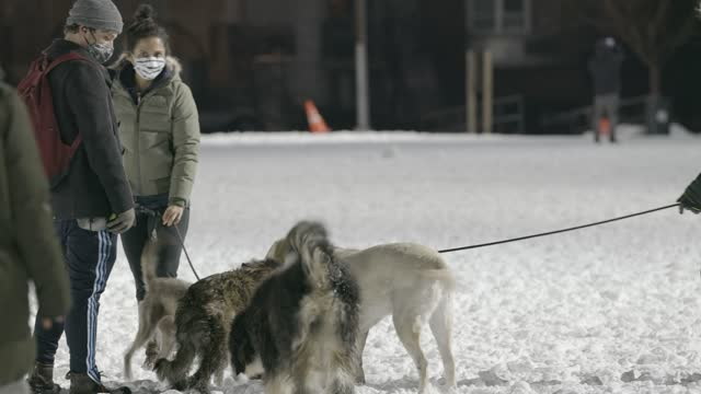 pet owners and their dog play at mccarren park, greenpoint, brooklyn on december 18 in new york city. a nor'easter brought heavy snowfall to new york... - pet owner stock videos & royalty-free footage