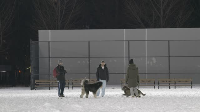 pet owners and their dogs mingle at mccarren park, greenpoint, brooklyn on december 18 in new york city. a nor'easter brought heavy snowfall to new... - pet owner stock videos & royalty-free footage