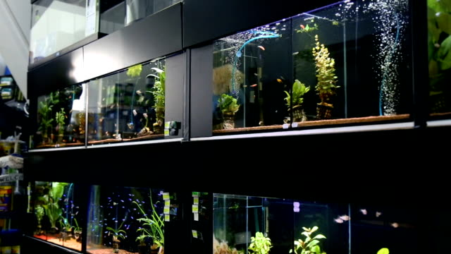 pet shop full of aquarium - aquarium stock videos & royalty-free footage