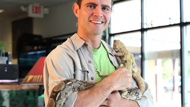 ms tu pet shop owner holding some reptiles / santa fe, new mexico, united states - petshop stock videos and b-roll footage