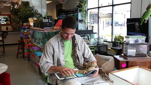 ms pet shop owner working on his tablet computer and holding his reptiles / santa fe, new mexico, united states - コードレスフォン点の映像素材/bロール