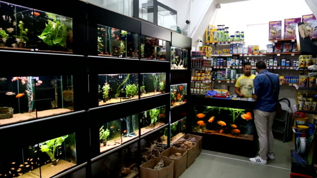 pet shop with a lot of fish tank - aquarium stock videos & royalty-free footage