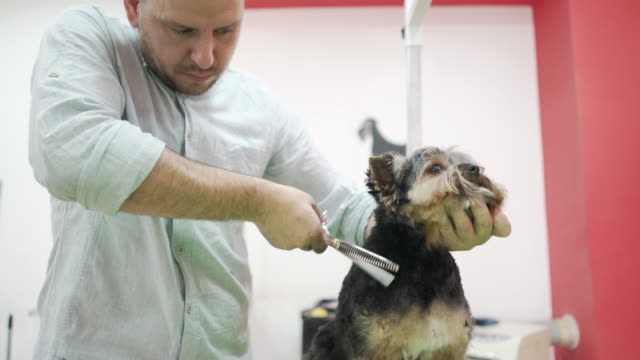 pet stylist - working animal stock videos & royalty-free footage