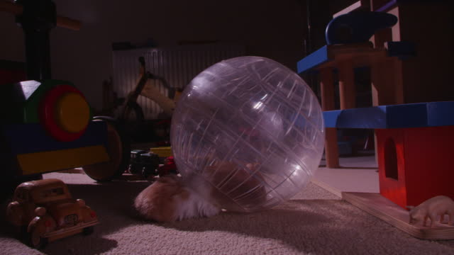 pet syrian hamster climbs into exercise ball and washes itself - エクササイズ用具点の映像素材/bロール