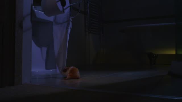 vídeos y material grabado en eventos de stock de ws pet syrian hamster pulling down toilet roll and stuffing it in its pouch in dark bathroom - hamster