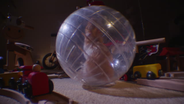 ms pet syrian hamster rolls exercise ball from camera across childs dark bedroom - ball stock videos & royalty-free footage
