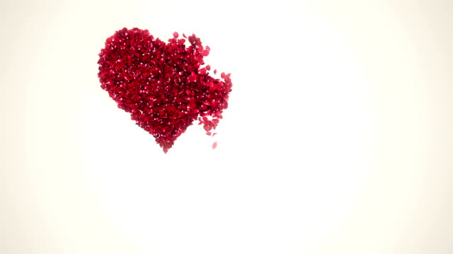 petals in heart shape falling white background - petal stock videos & royalty-free footage