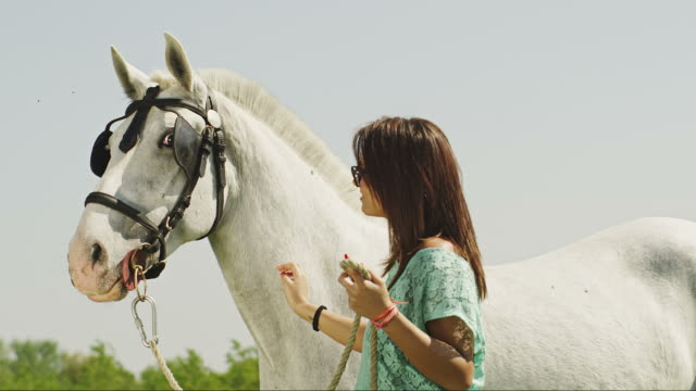 peting horse - stroking stock videos and b-roll footage