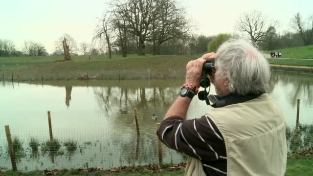 stockvideo's en b-roll-footage met petition asking for island on pond in hampstead heath to become a protected haven for wildlife england london hampstead heath ext island in middle of... - bill oddie