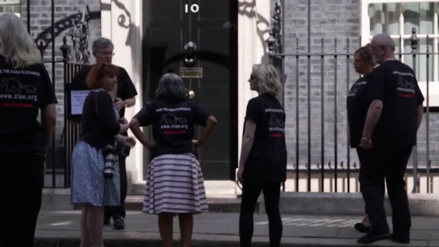 a petition calling on a ban on adverts for elephant tourist attractions and entertainments is delivered to downing street by actors evanna lynch and... - evanna lynch stock videos & royalty-free footage