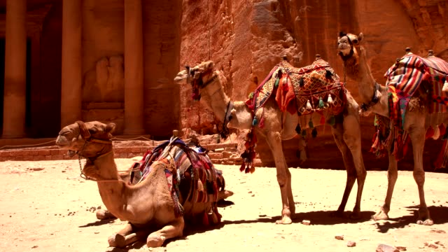 petra -  camels near al khazneh (the treasury) - 4th century bc stock videos and b-roll footage
