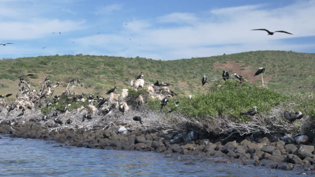 vídeos de stock e filmes b-roll de petrel nesting site - ecoturismo
