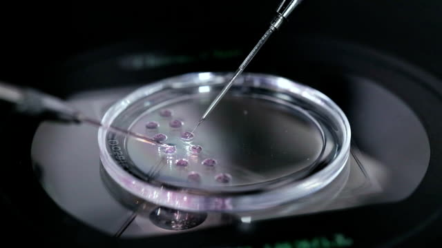 petri dish with human egg. in vitro fertilisation. - piastra petri video stock e b–roll