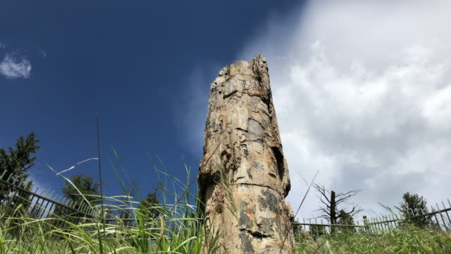 Petrified tree at Yellowstone national park